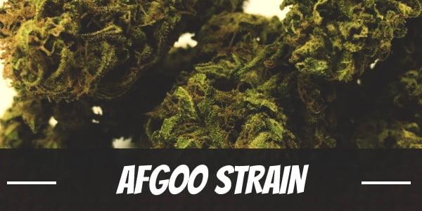 Afgoo Strain