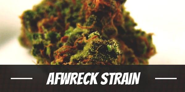 Afwreck Strain
