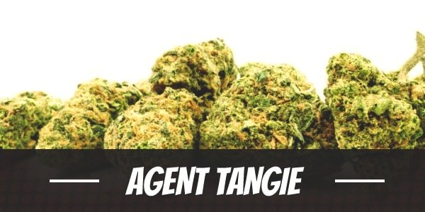 Agent Tangie