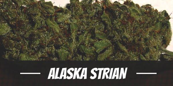 Alaska Strian