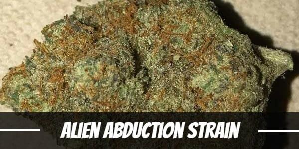 Alien Abduction Strain