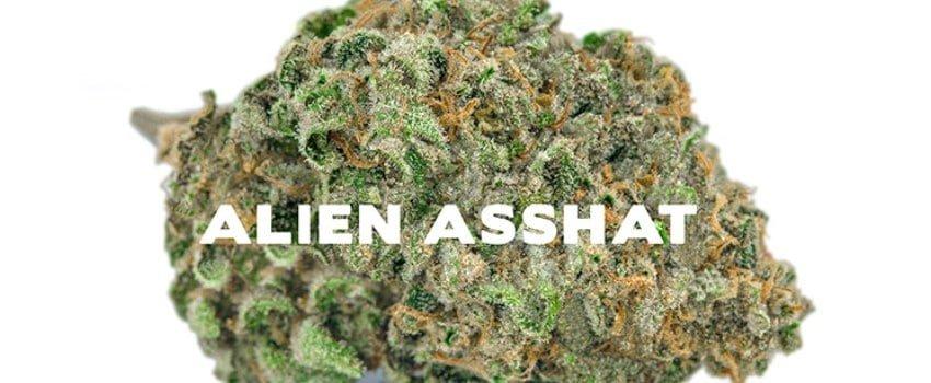 Alien Asshat Medical