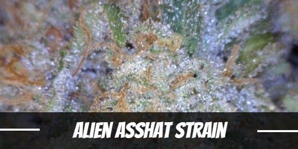Alien Asshat Strain