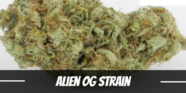 Alien OG Strain