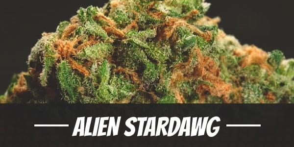 Alien Stardawg