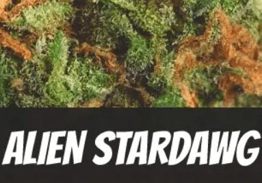 Alien Stardawg Strain