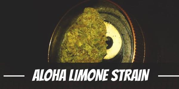 Aloha Limone Strain