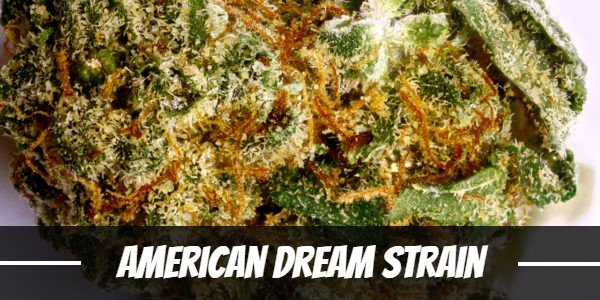 American Dream Strain