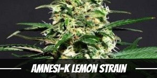 Amnesi-K Lemon Strain