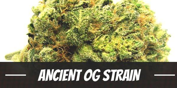 Ancient OG Strain