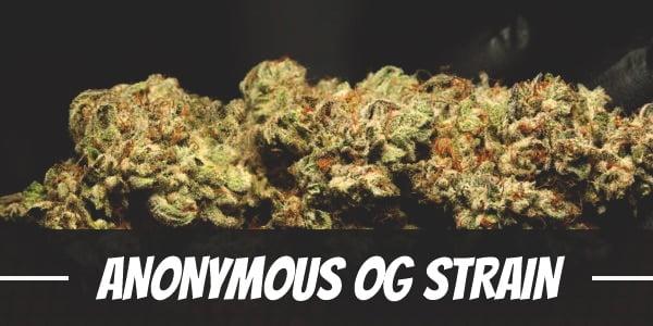 Anonymous OG Strain