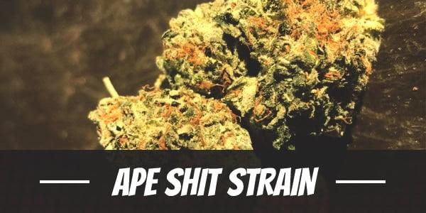 Ape Shit Strain