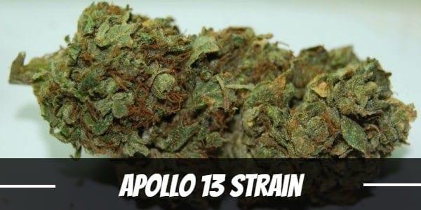 Apollo 13 Strain