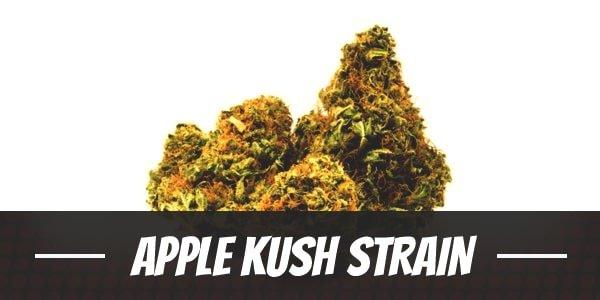 Apple Kush Strain