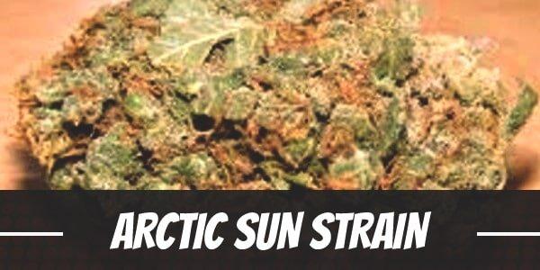 Arctic Sun Strain