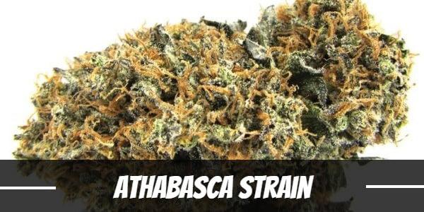 Athabasca Strain