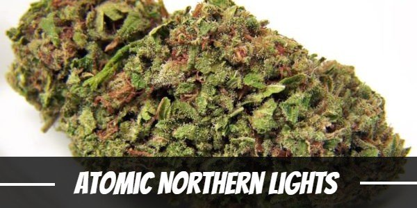 Atomic Northern Lights Strain