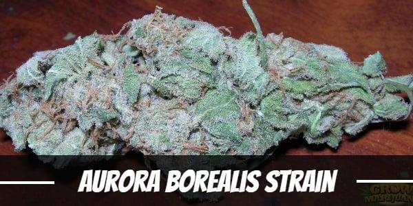 Aurora Borealis Strain