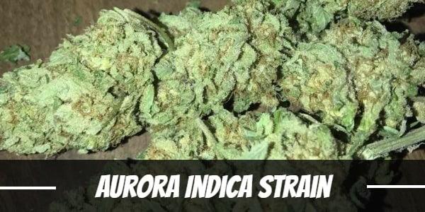 Aurora Indica Strain