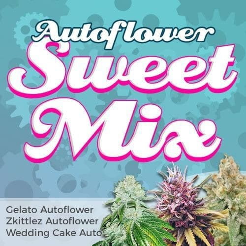 ILGM - Autoflower Sweet Mix