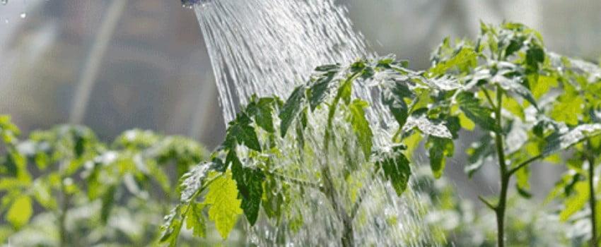 Avoid Watering Mistakes
