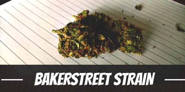 Bakerstreet Strain