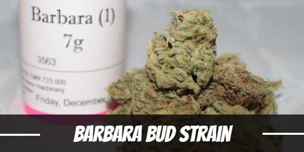 Barbara Bud Strain