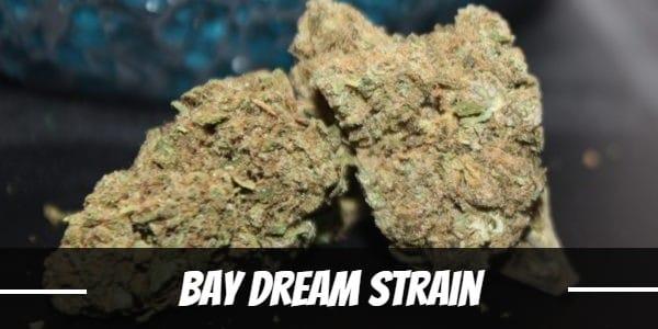 Bay Dream Strain