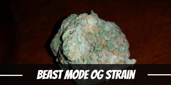 Beast Mode OG Strain