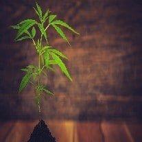 Beginner's Guide to Growing Weed
