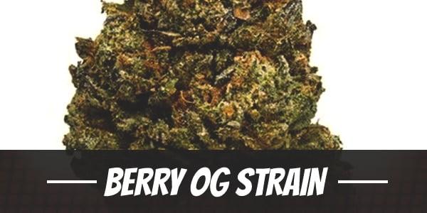 Berry OG Strain