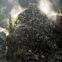 Best Compost And Fertilizers For Outdoor Marijuana Plants