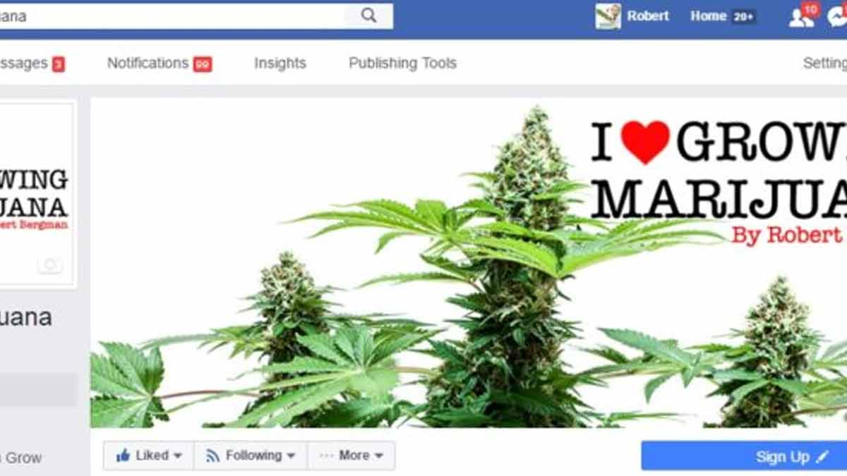 Best Marijuana Facebook Pages