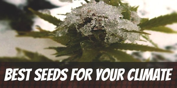 Best Outdoor Seeds For Your Climate