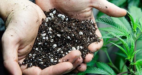 Best Soil For Outdoor Marijuana Plants