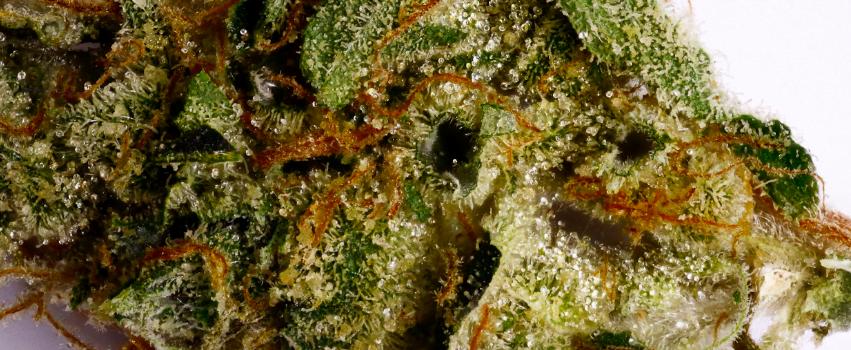Bio-Diesel_Marijuana