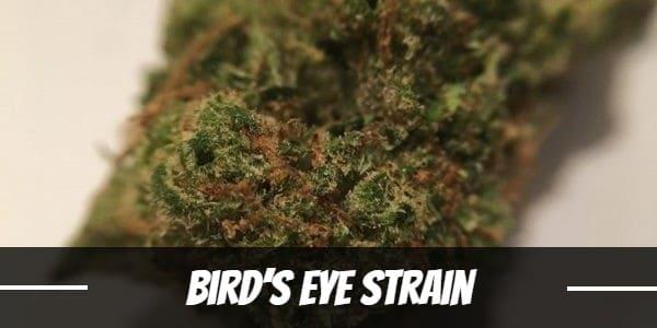 Bird's Eye Strain