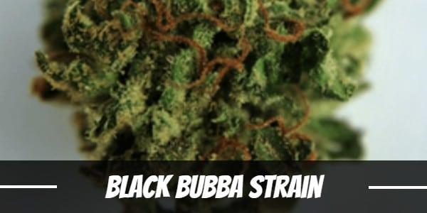 Black Bubba Strain