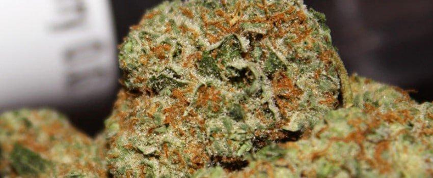 Black Cherry OG Medical