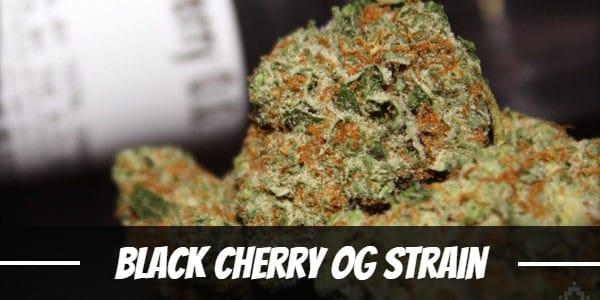 Black Cherry OG Strain