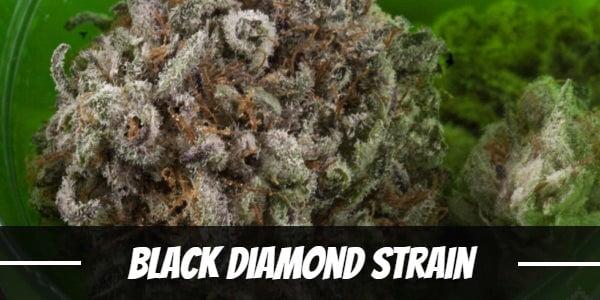 Black Diamond Strain