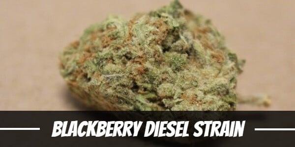 Blackberry Diesel Strain