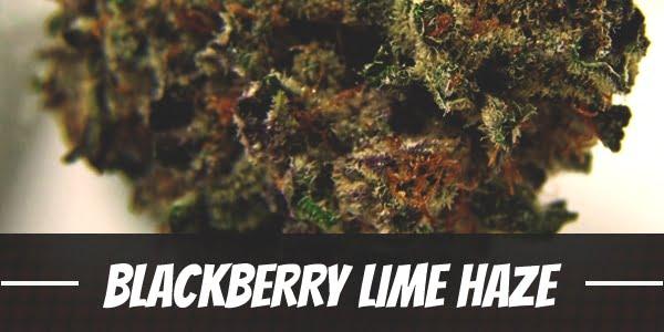 Blackberry Lime Haze