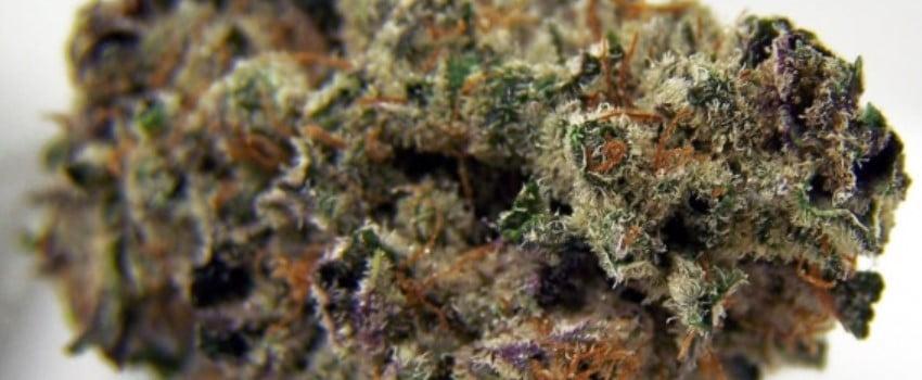 Blackberry Lime Haze Medical