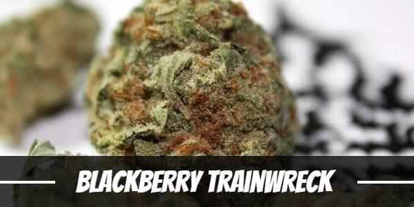 Blackberry Trainwreck Strain