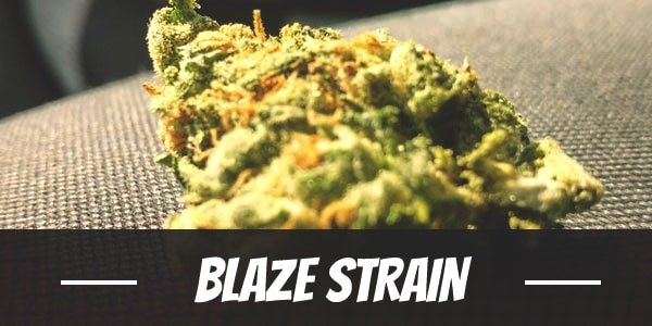 Blaze Strain