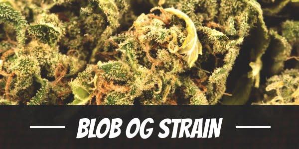 Blob OG Strain