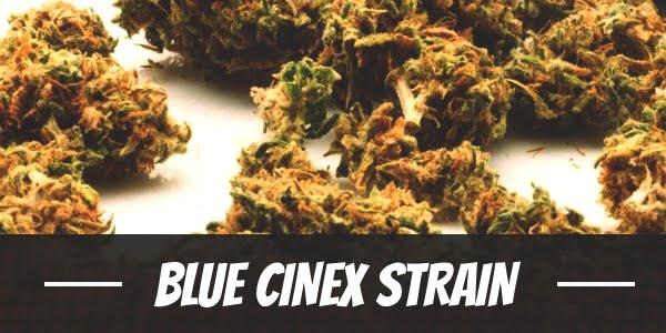 Blue Cinex Strain