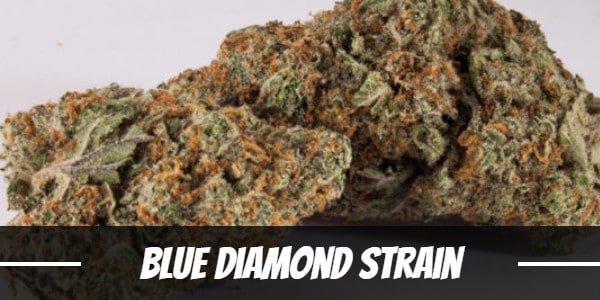 Blue Diamond Strain