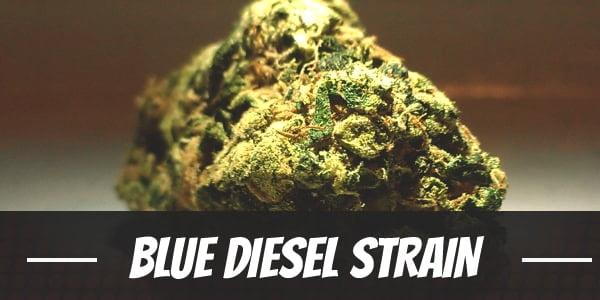 Blue Diesel Strain
